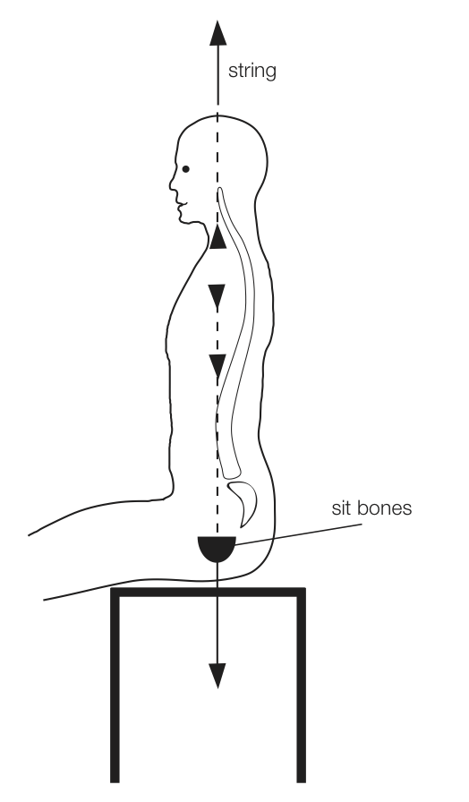 principles of good posture - lumbar and sit bones